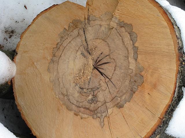 порок древесины