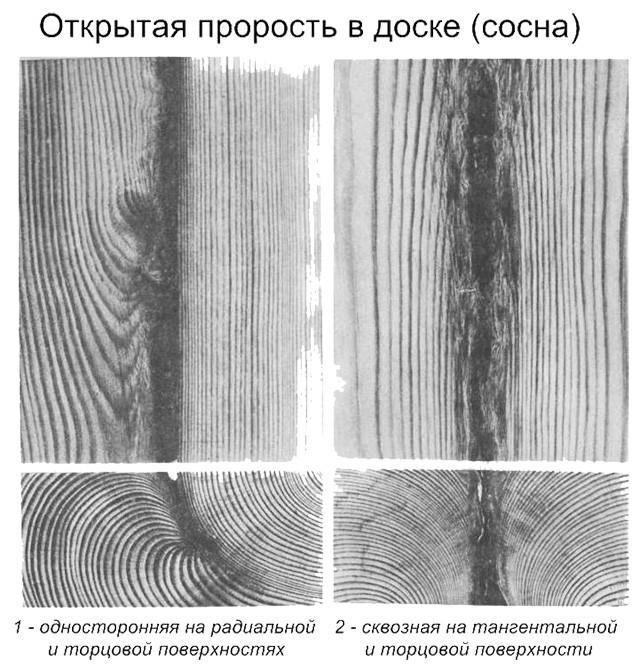 схема проростей в древесине