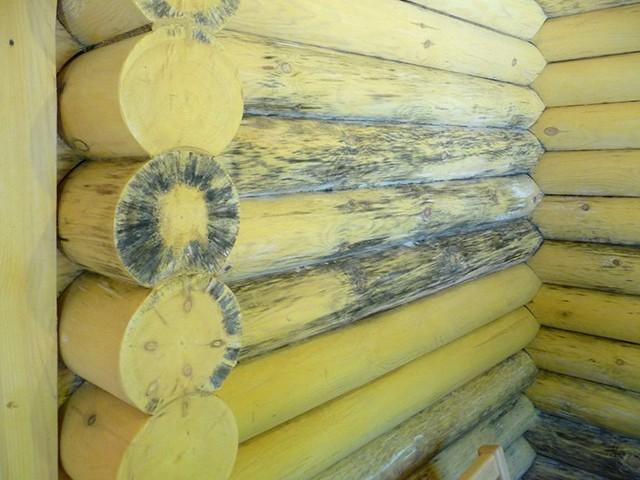 плесень древесины