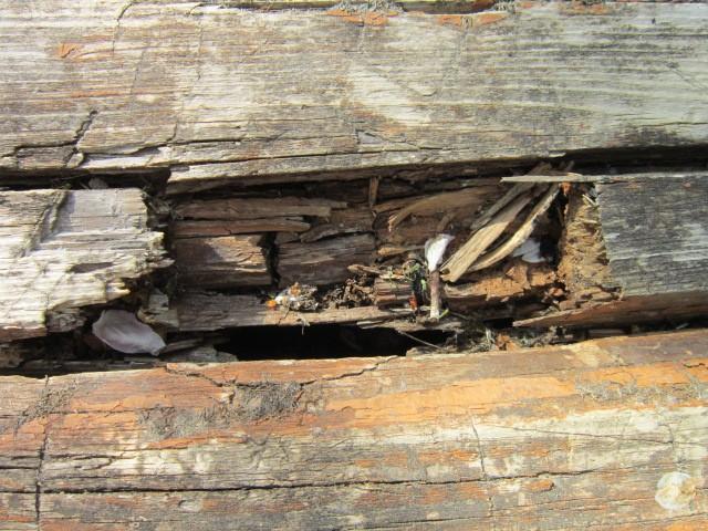 гниль древесины