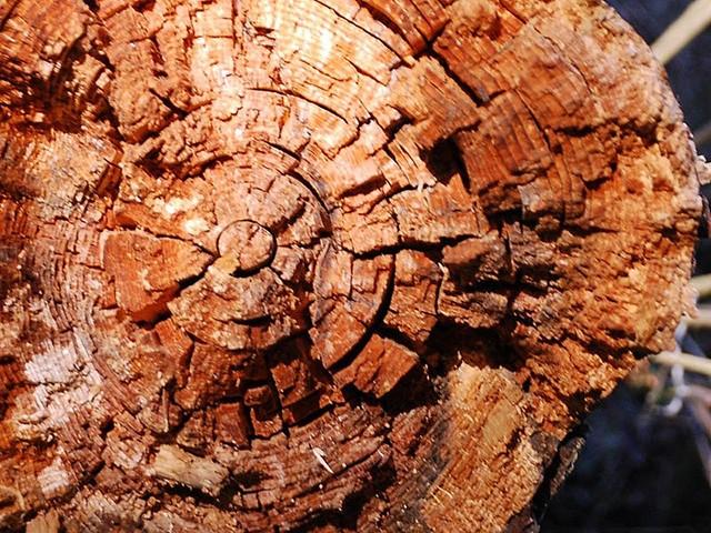 бурая гниль с трещинами на древесине